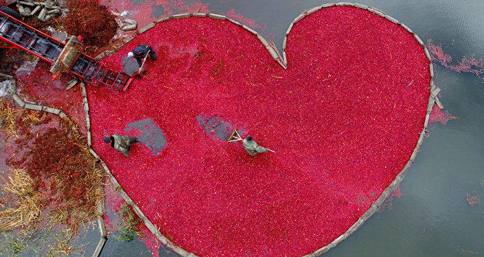 قلب من الكرز، للمصور سيرغي غابون من بيلاروسيا