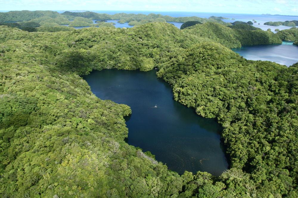 قناديل بحيرة في بالاو