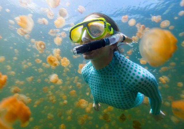 صورة تحت الماء لامرأة غطاسة مع قناديل البحر الذهبية في بحيرة في بالاو.