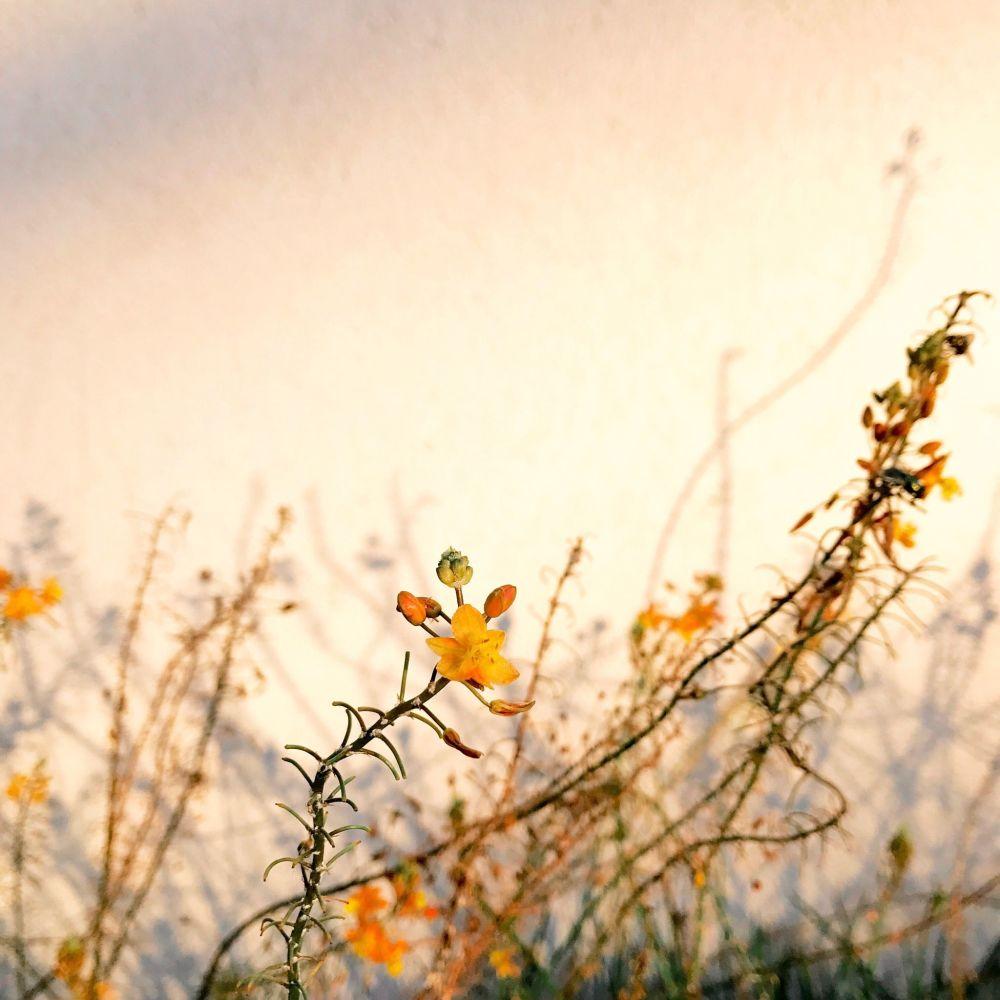 صورة بعنوان Light، للمصور أليسون هيلينا، الحائزة على المركز الأول في فئة النباتات