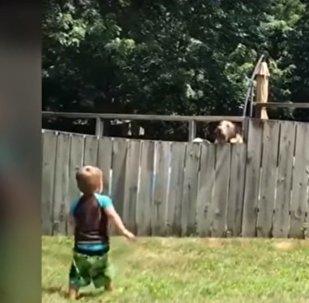 كلب يلعب الكرة مع طفل من خلف الأسوار