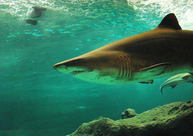 ولي عهد دبي بين أسماك القرش المفترسة