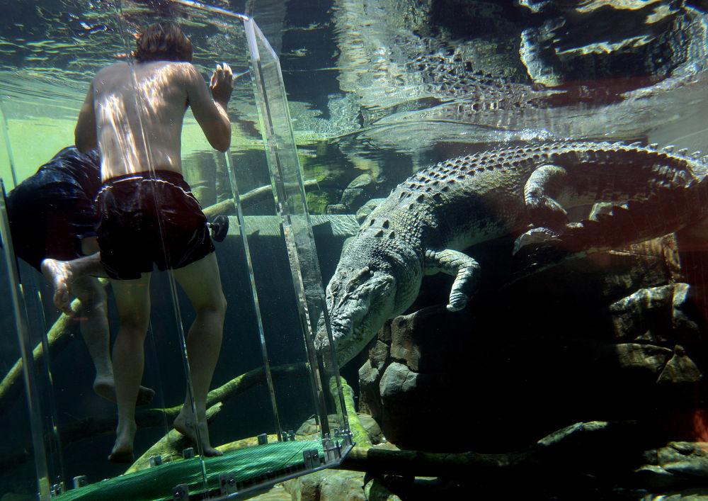مدينة الملاهي  Crocosaurus Cove للطبيعة البرية  في داروين، أستراليا