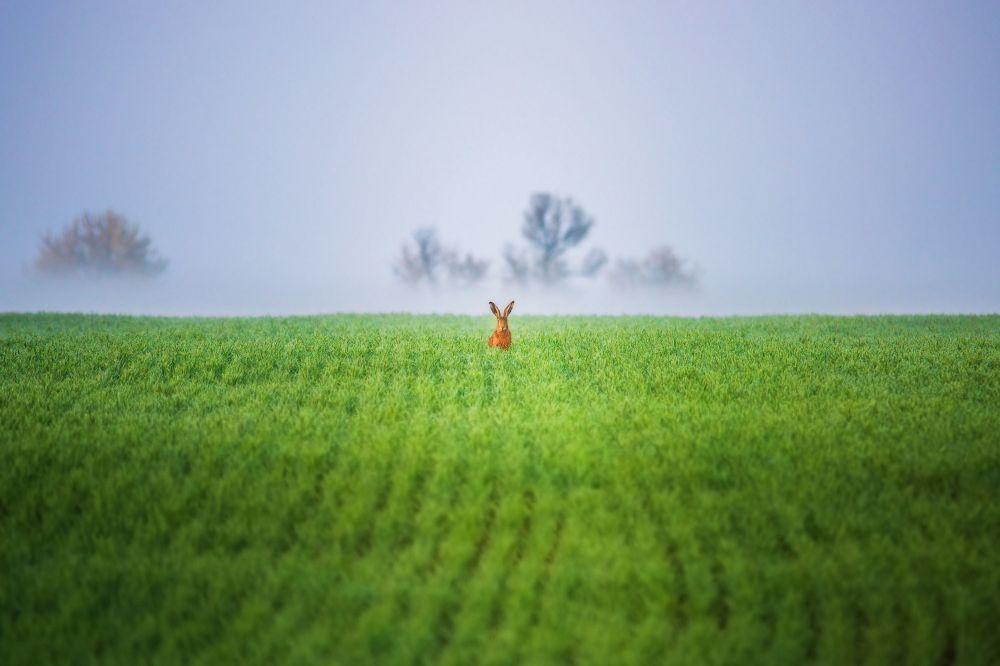 صورة بعنوان يا ويلك مني!، للمصور فلاديمير أستابكوفيتش، الحاصلة على المركز الأول في فئة عالم الحيوان، في مسابقة التصوير لشركة Nikon