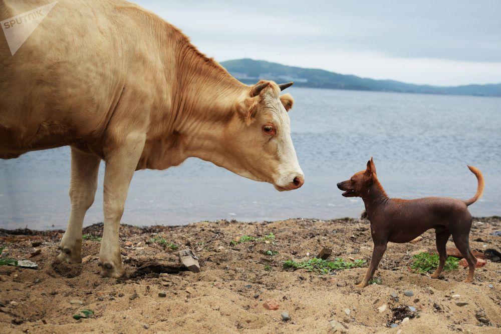 حيوانات في بلدة على جزيرة بوتياتين