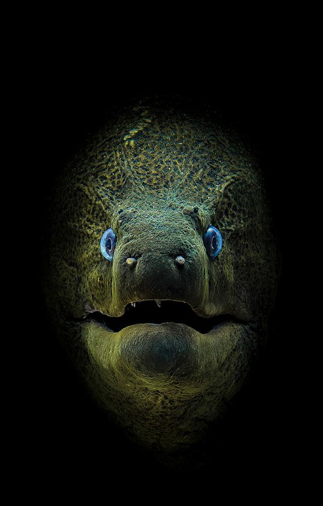 صورة للمصور جيمي هال، الذي فاز بالمركز الأول في فئة كاميرا مدمجة لمجلة الصور تحت الماء لعام 2018