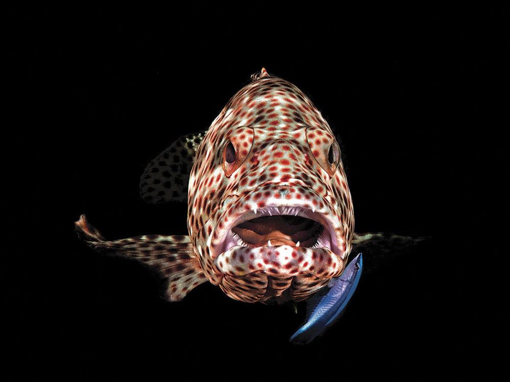 صورة للمصور فيرينس لورينتش، الذي فاز بالمركز الثالث في فئة كاميرا مدمجة لمجلة الصور تحت الماء لعام 2018