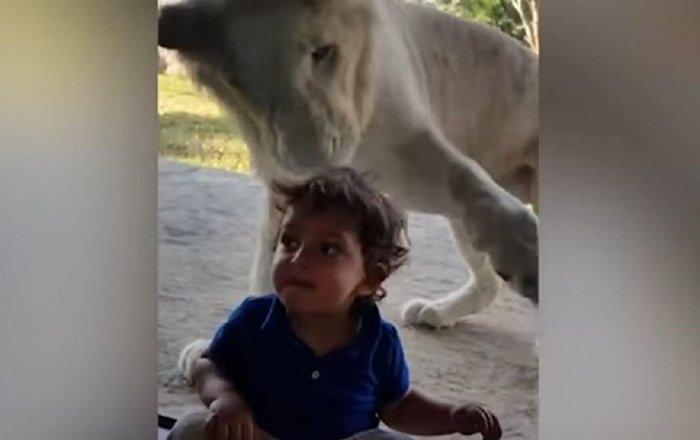 أشجع طفل في العالم