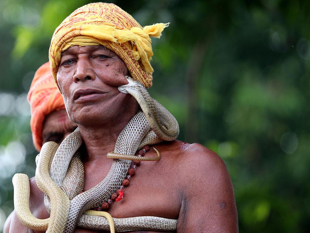 ساحر الثعابين الهندي خلال مهرجان ما مانسا بوجا في منطقة  في دهالبهومغاره، جهارخاند، الهند 17 أغسطس/ آب 2018