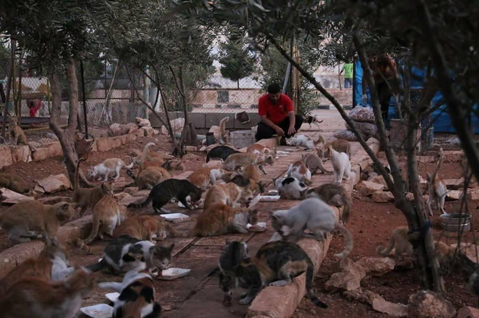 وقت الطعام في محمية القطط في حلب