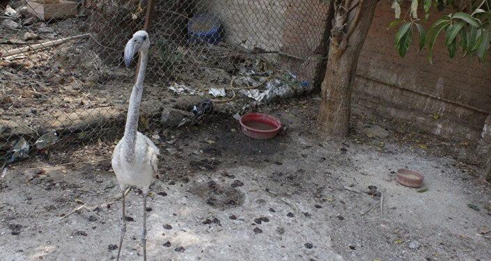 طيور بقرية مملكة الثعابين المصرية
