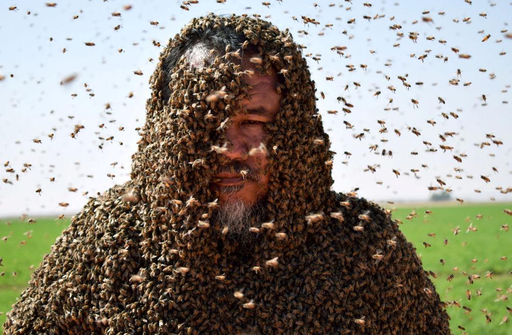 رجل سعودي غطى النحل جسده بالكامل