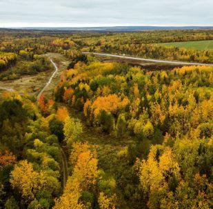 غابة في فصل الخريف في منطقة بيرم