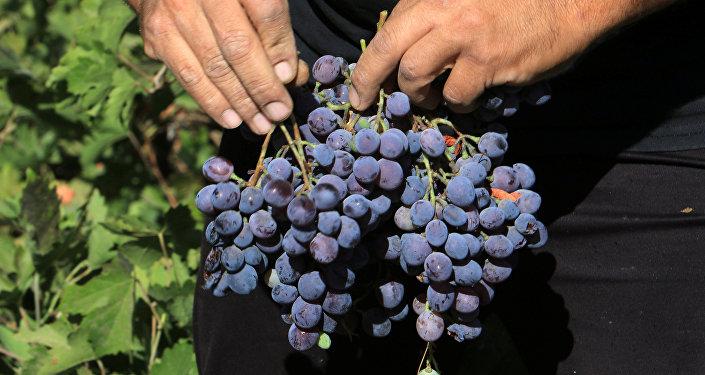 صناعة النبيذ