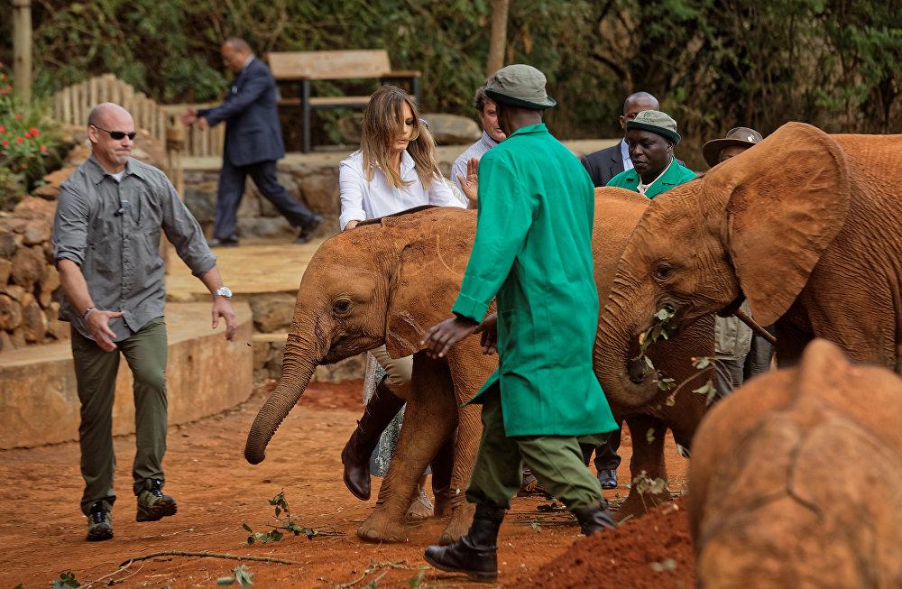 ميلانيا ترامي تتعثر أثناء إطعامها لفيل صغير في كينيا، 5 أكتوبر/تشرين الأول 2018