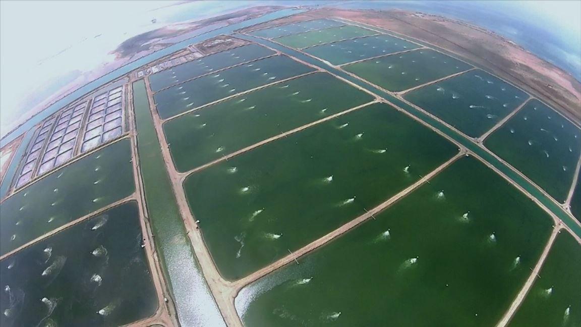 مزرعة سمك الروبيان على شاطئ بحر الليث РЫБА
