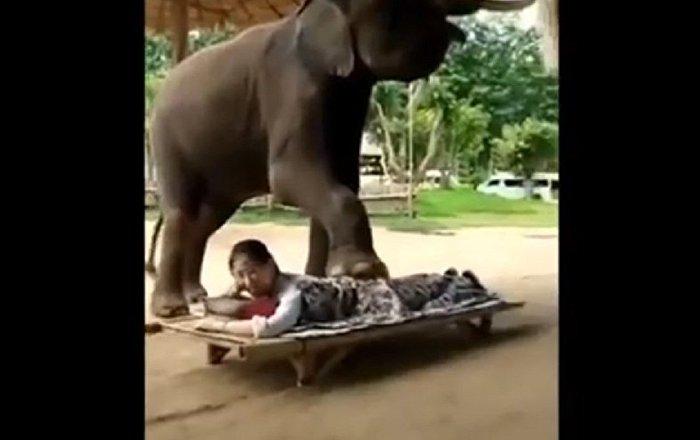 مساج تحت أقدام فيل