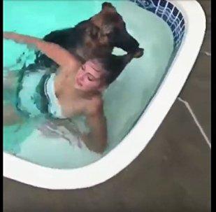 كلب ينقذ صاحبته من الغرق