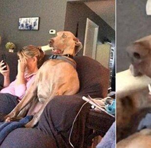 ما هو الشيئ الذي شاهده الكلب ليصاب بصدمة قومية وفي فمه عظمة