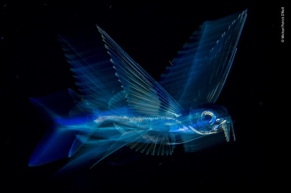 صورة (Night flight)، للمصور مايكل باتريك أونيل من الولايات المتحدة، الفائز في فئة تحت الماء  بالمسابقة
