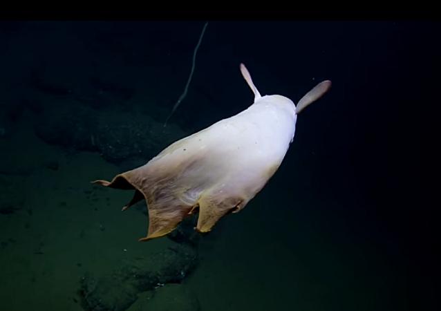 باحثون يتمكنون من تصوير مخلوق كـشبح الأعماق