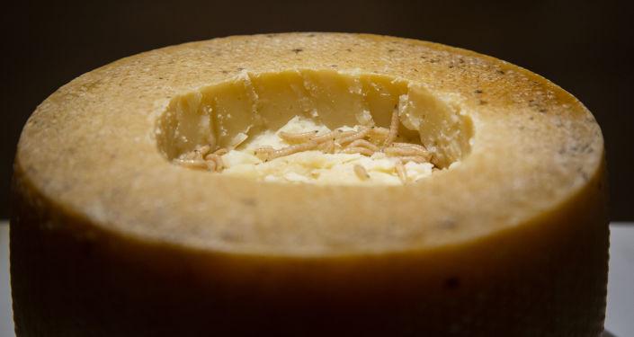 طبق إيطالي - جبنة كاسو مارزو، وهي جبنة فاسدة