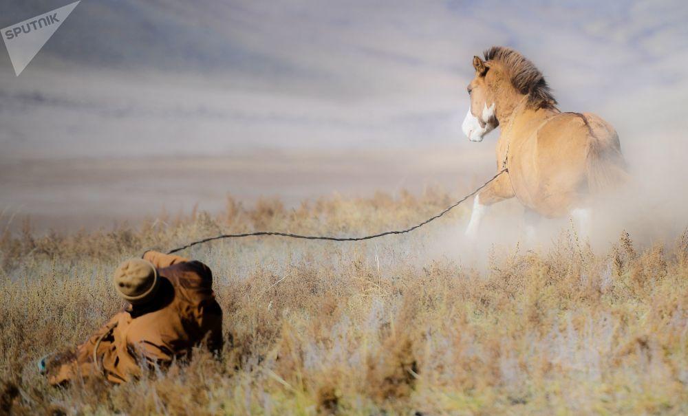 راعي منغولي والخيل