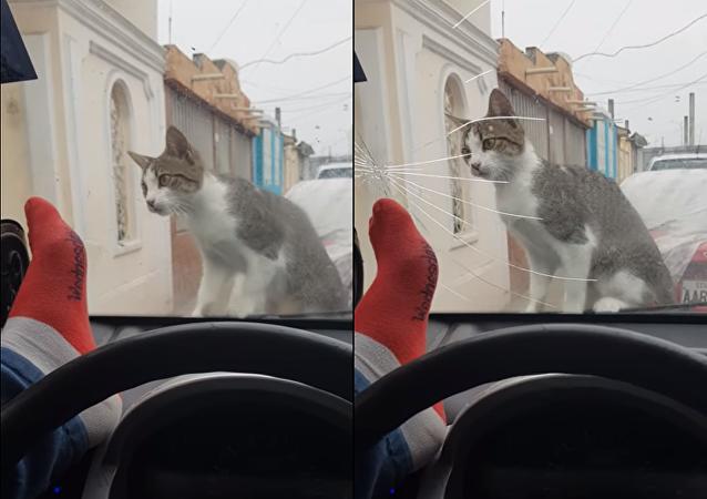 حاول إخافة قطة فكسر زجاج سيارته