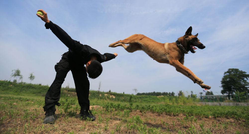كلاب الخدمة
