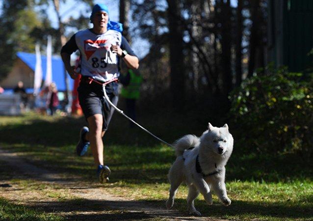 معرض الكلاب في روسيا