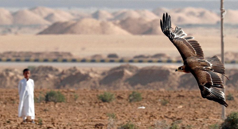 مواعيد خاصة لتدريب الصقور لمسابقات الصيد في قطر
