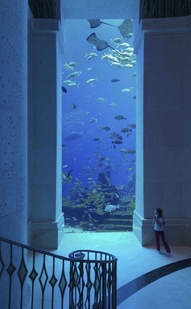 فندق Atlantis The Palm في دبي، الإمارات العربية المتحدة