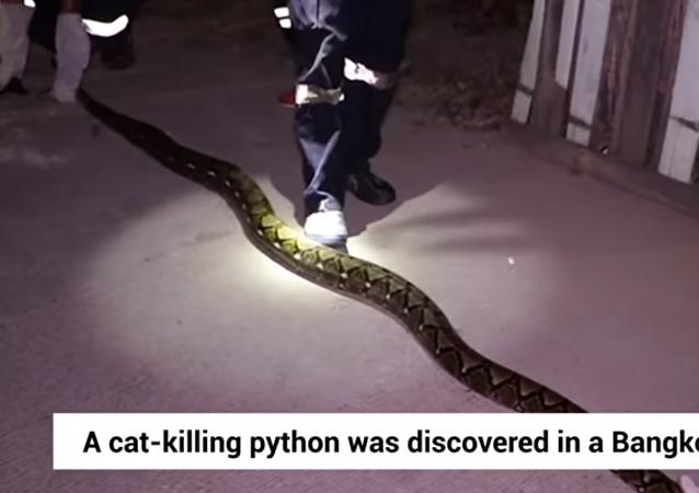 ثعبان يختبأ داخل منزل لأكثر من سنة ويفترس القطط