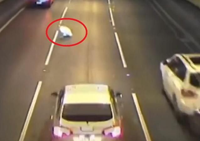 كلب يقفز من سيارة متحركة