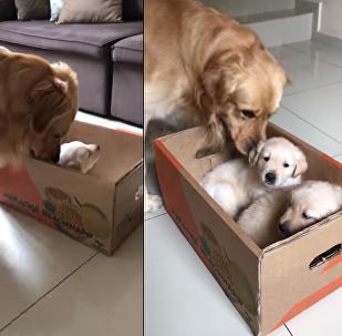 شاهد ماذا فعل الكلب بالهدية التي قدمتها له صاحبته