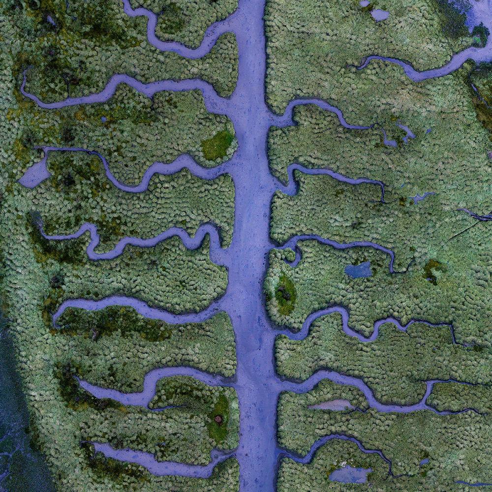 مجموعة من تيارات مائية على شكل عظام السمك، في مستنقع مالح بالقرب من كورونا شمال إسبانيا