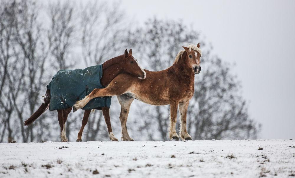 خيول في حقل يغطيه ثلج كثيف، جنوب غرب ألمانيا 13 ديسمبر/ كانون الأول 2018