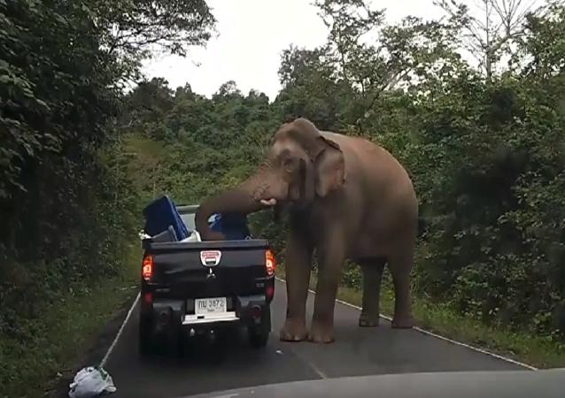 فيل هائج يهاجم سيارة عائلة