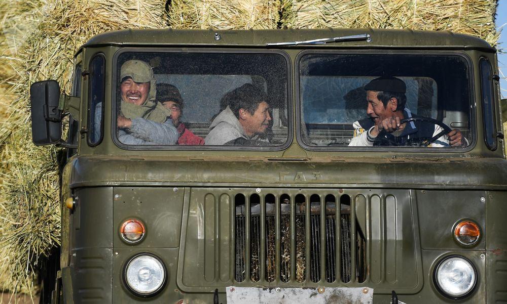 عمال في سيارة الشاحنة أثناء جمع التبن في السهوب المنغولية