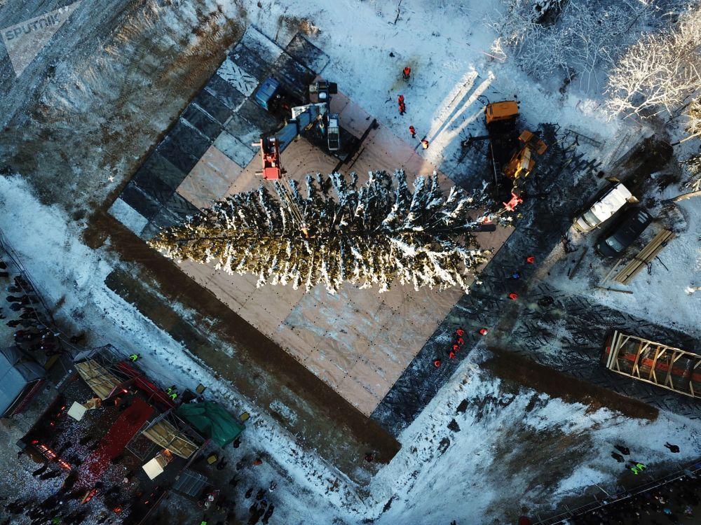 عملية قطع أكبر وأهم شجرة عيد ميلاد في منطقة ضواحي موسكو، ونقلها إلى الساحة الحمراء، موسكو 18 ديسمبر/ كانون الأول 2018