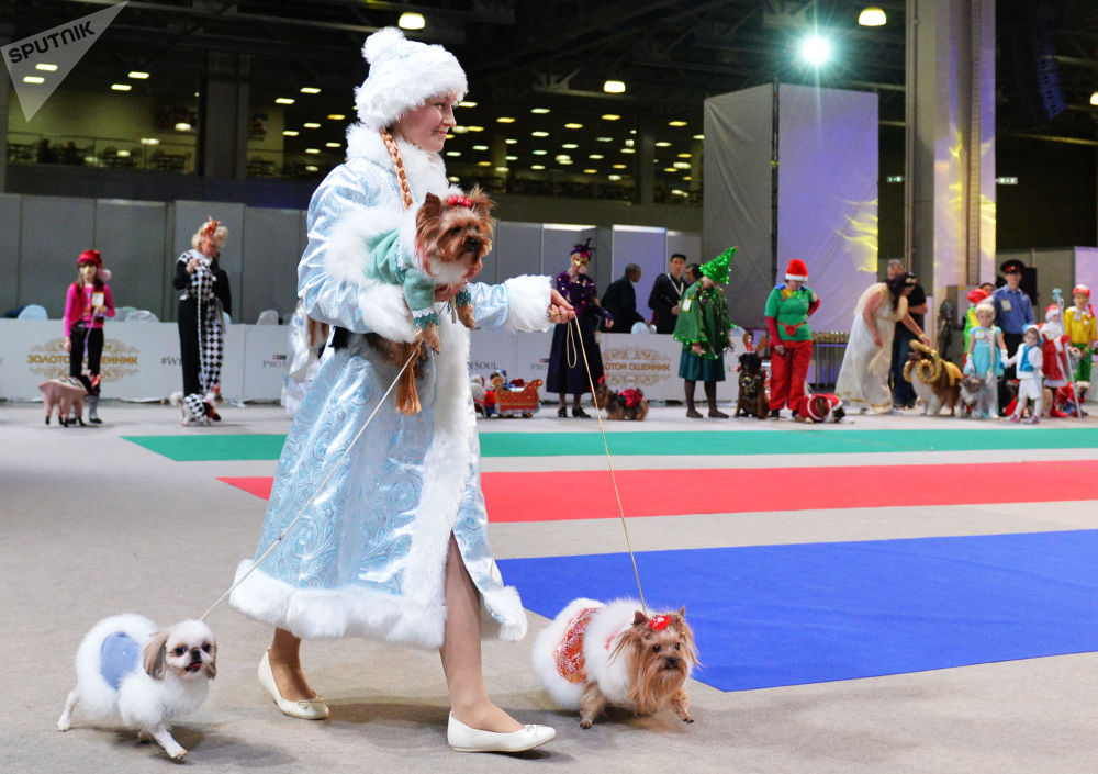 الكلاب وأصحابهم يشاركون في مسابقة الأزياء في موسكو