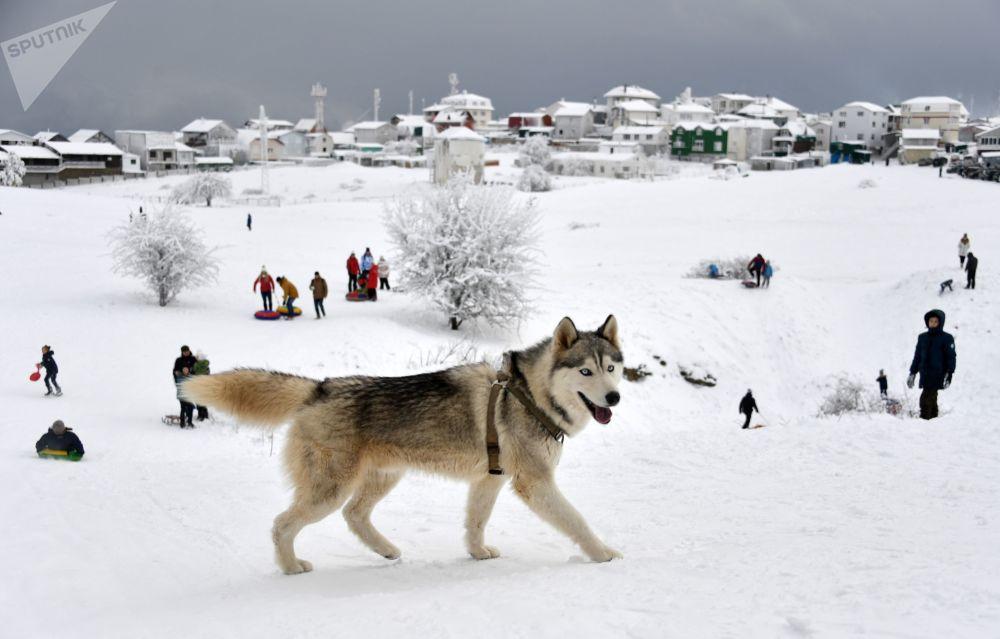كلب على جبل آي بيتري في شبه جزيرة القرم الروسية