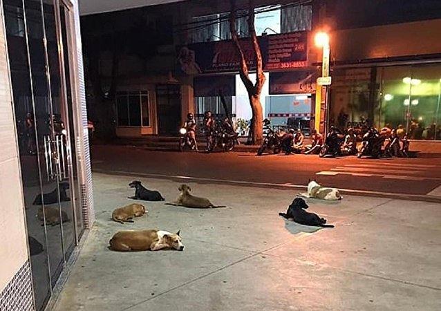 كلاب تطارد صاحبها حتى المستشفى