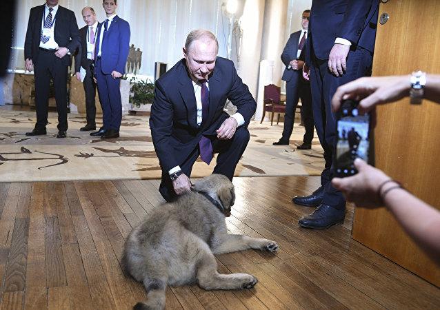هدية غير متوقعة من الرئيس الصربي لبوتين