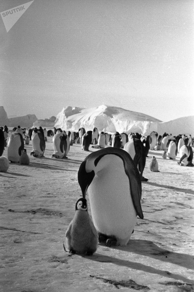 صورة فوتوغرافية من فيلم وثائقي (قصة البطارقة، 1958)