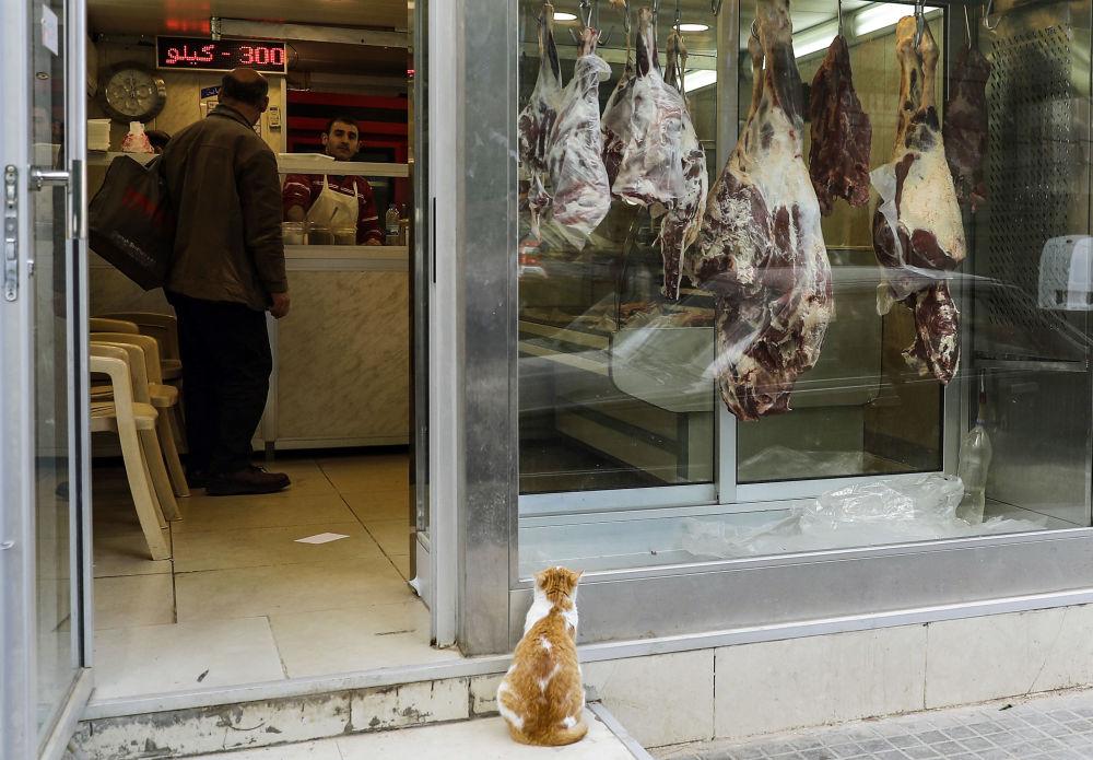 قط يقف على باب محل تجاري لبيع اللحوم في بيروت، لبنان 24 يناير/ كانون الثاني 2019