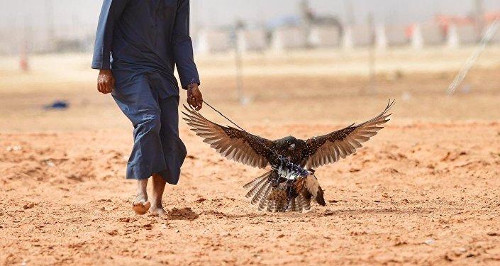 المتسابقون خلال مهرجان الملك عبد العزيز للصقور