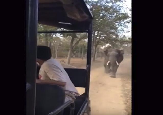 فيل هائج يطارد سياحا في الهند