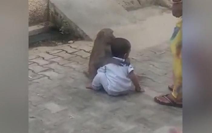 قرد يخطف طفل ويرفض التخلي عنه (فيديو)