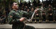 ضابط سلاح بحري تايلاندي يتعامل مه أفعى الكوبرا في إطار التدريبات العسكرية المشترك كوبرا غولد (Cobra Gold) بين الجيشين الأمريكي والتايلندي في مقاطعة تشونبوري الساحلية في 19 فبراير/ شباط عام 2018.